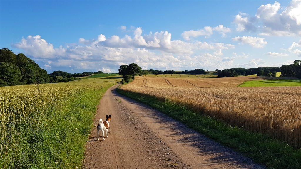 Feldweg mit Luna