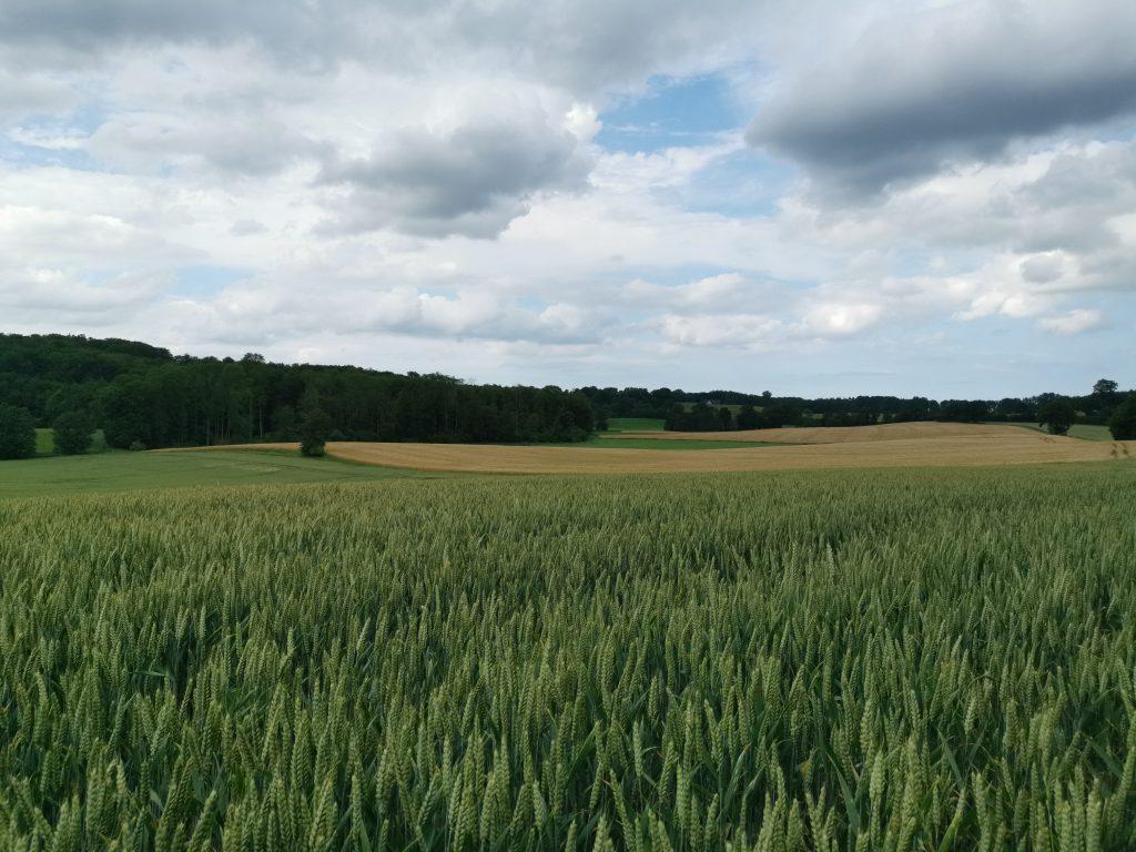 Feld in Ostholstein